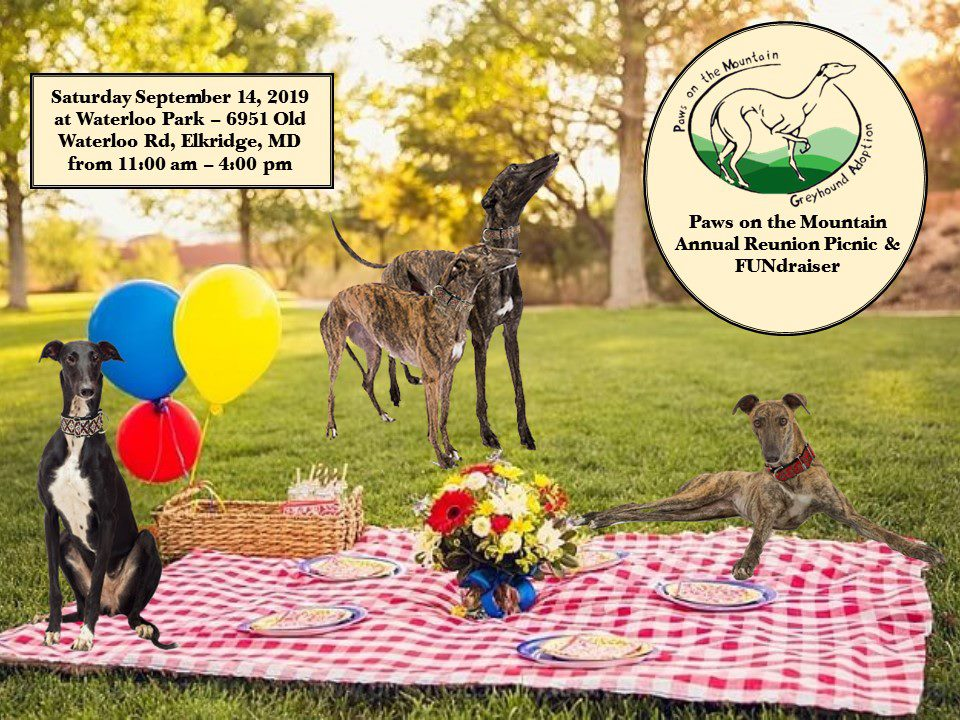 Paws on the Mountain Greyhound Adoption – We place retired